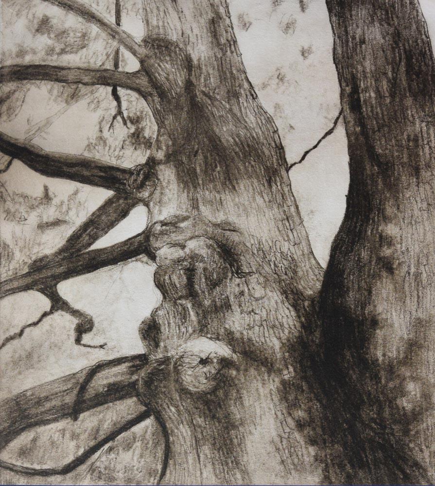 Liz Mitchell The Noble Oak intaglio printmaking 12x13 in. 2018